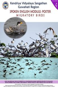 MIGRATORY-BIRDS